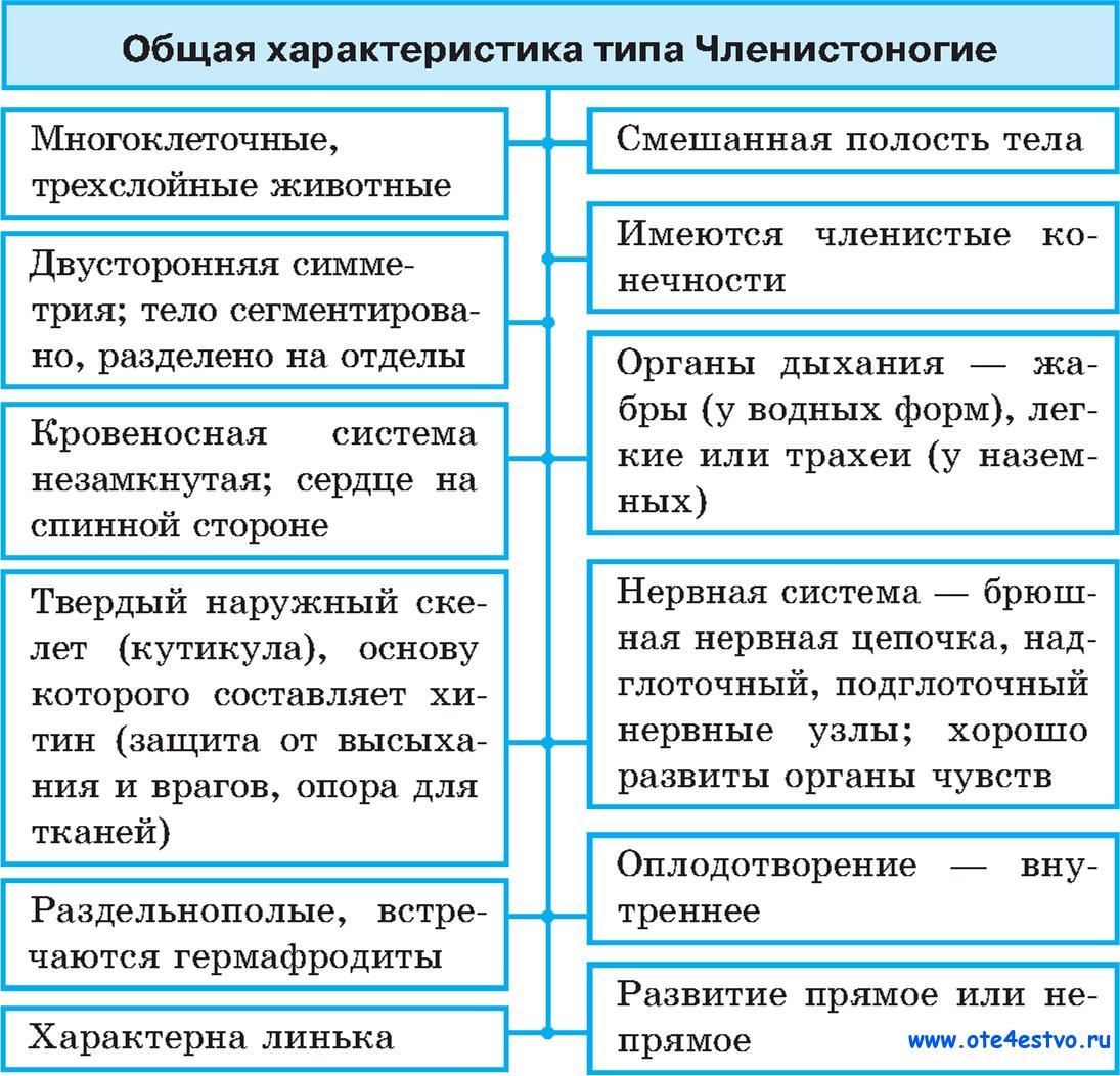 Членистоногие Общие черты