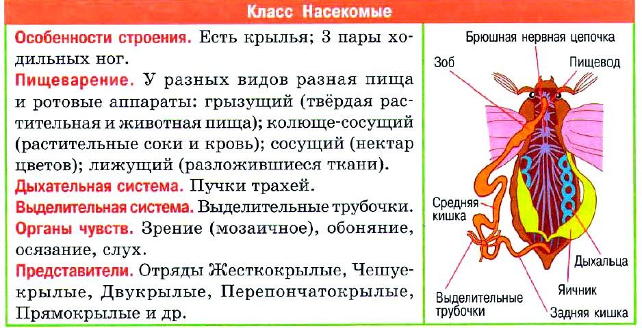 насекомые таблица